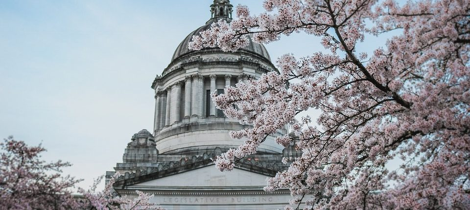 washington state capitol dome with cherry blossoms